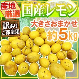"""【送料無料】""""完熟国産レモン"""" 訳あり 約5kg 大きさおまかせ 産地厳選【予約 7月中下旬以降】"""