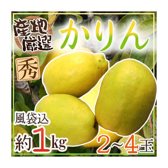"""""""かりん"""" 秀品 2〜4玉 約1kg 産地厳"""