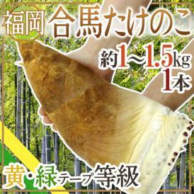 """福岡 合馬産 """"たけのこ"""" 1本 約1~1.5kg 等級 黄 緑【予約 3月下旬~4月】"""