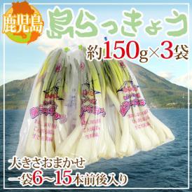 """鹿児島県 """"島らっきょう"""" 約150g×3袋 大きさおまかせ【予約 1月末以降】"""