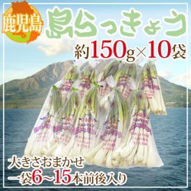 """【送料無料】鹿児島県 """"島らっきょう"""" 約150g×10袋 約1.5kg 大きさおまかせ【予約 1月末以降】"""
