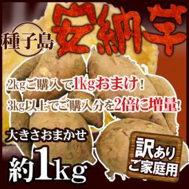 """種子島産 """"安納芋"""" 訳あり 約1kg《2kg購入で1kgおまけ、3kg以上購入で2倍に増量》【予約 10月下旬以降】 送料無料"""