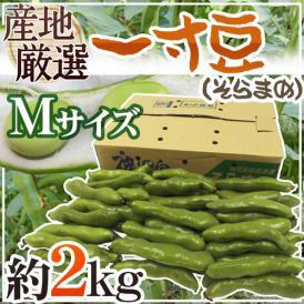 """【送料無料】九州・和歌山産他 """"一寸豆(そら豆)"""" Mサイズ 約2kg【予約 4月以降】"""