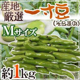 """【送料無料】九州・和歌山産他 """"一寸豆(そら豆)"""" Mサイズ 約1kg【予約 4月以降】"""