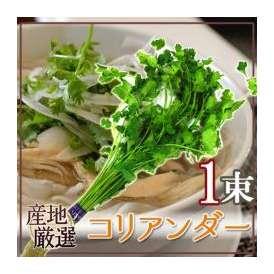 """産地厳選 """"コリアンダー"""" 1束"""