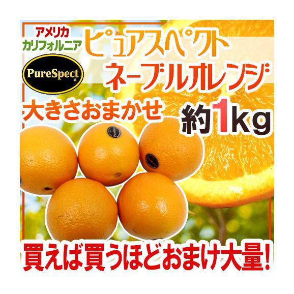 """【送料無料】""""プレミアムネーブルオレンジ ピュアスペクト"""" 約1kg 大きさおまかせ《2kg購入で1kg、3kgで2kg、5kgで5kg、7kg購入で10kgおまけ》【予約 1月下旬以降】01"""