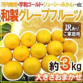 """【送料無料】""""和製グレープフルーツ"""" 訳あり 約3kg 大きさおまかせ【予約 4月以降】"""