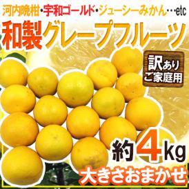 """【送料無料】""""和製グレープフルーツ"""" 訳あり 約4kg 大きさおまかせ【予約 4月以降】"""