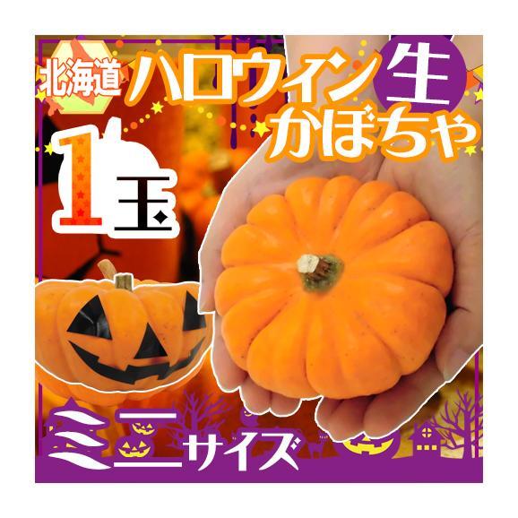 """北海道産 """"ハロウィンかぼちゃ"""" �"""