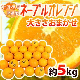 """【送料無料】""""ネーブルオレンジ"""" 約5kg 大きさおまかせ アメリカ・オーストラリア産【予約 入荷次第発送】"""