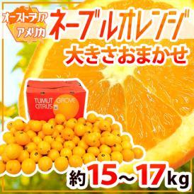"""【送料無料】""""ネーブルオレンジ"""" 約15~17kg 大きさおまかせ アメリカ・オーストラリア産【予約 入荷次第発送】"""