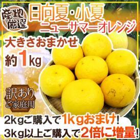 """【送料無料】""""日向夏・小夏・ニューサマーオレンジ"""" 訳あり 約1kg 大きさおまかせ 産地厳選《2kg購入で1kgおまけ♪3kg以上購入で2倍に増量》【予約 4月以降】"""