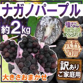"""【送料無料】長野産 """"ナガノパープル"""" 訳あり 約2kg 大きさおまかせ【予約 9月以降】"""
