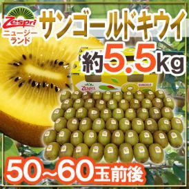 """【送料無料】ゼスプリ """"サンゴールドキウイ"""" 50~60玉 約5.5kg【予約 4月下旬以降】"""
