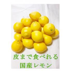 【送料無料】皮まで安全安心な美味しい「生口島レモン」【10kg】