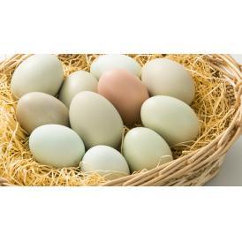 北海道の広い大地で放し飼い 日本でいちばん幸せな鳥の卵