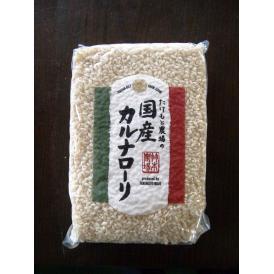 【石川県】イタリア米「カルナローリ」