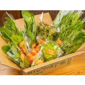 旬の彩り野菜セット