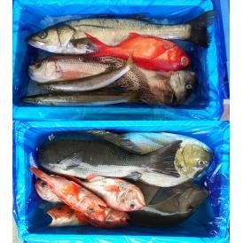 沼津港直送! とれたて鮮魚ボックス