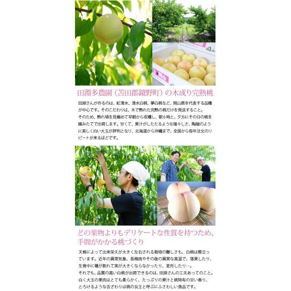 岡山県産清水白桃100% 果実たっぷりとろけるような濃質食感 清水白桃ジュレ12個入04