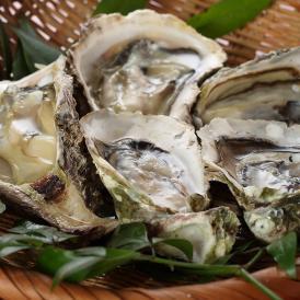 小粒でおいしい、一口サイズ♪ 通好みの大きさ オイスターバーで人気の牡蠣です!!