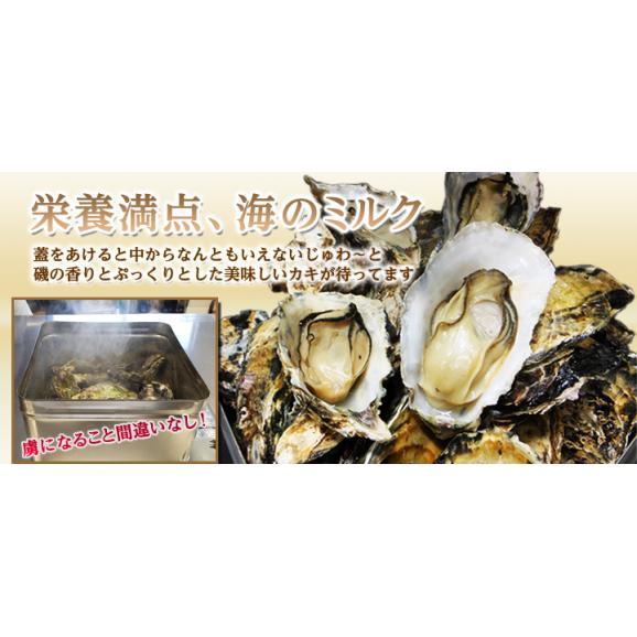 冷凍牡蠣の缶焼きセット2kg(瀬戸内海産)【春のみるく牡蠣:期間限定】03