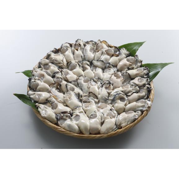 広島県産かきむき身1kg加熱用【春のみるく牡蠣:期間限定】01