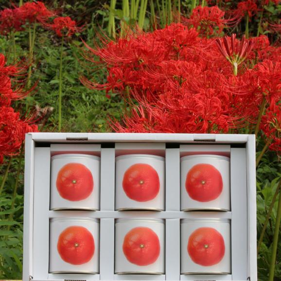 瀬戸内国際芸術祭2016モデル 香川県産小原紅みかん缶詰6缶ギフト これからのお歳暮シーズンにいかがですか?おすすめのお取り寄せグルメです。01