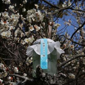 梅と桜の婀娜くらべ -梅-