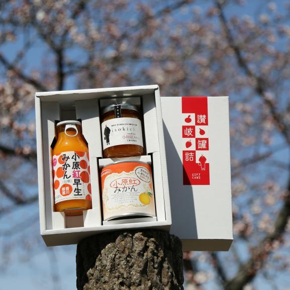 香川県産小原紅みかん小ギフト 缶詰+ジャム+ジュース 変わったモノ探していませんか? おすすめ お中元 お歳暮 菅内閣が発足しましたー!!経済もっともっと上向きになぁれ~ いっぺぇ売れてけれ~06
