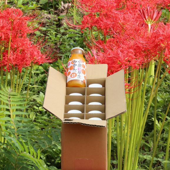 香川県産小原紅みかんジュース10本 今売れてるジュースです!年間出荷量30,000本を突破しました! お中元 お歳暮 菅内閣が発足しましたー!!経済もっともっと上向きになぁれ~ いっぺぇ売れてけれ~01