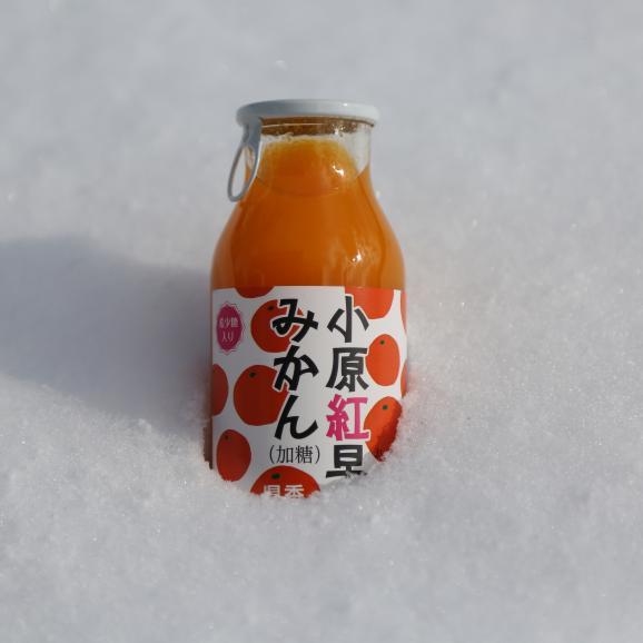 香川県産小原紅みかんジュース10本 今売れてるジュースです!年間出荷量30,000本を突破しました! お中元 お歳暮 菅内閣が発足しましたー!!経済もっともっと上向きになぁれ~ いっぺぇ売れてけれ~06