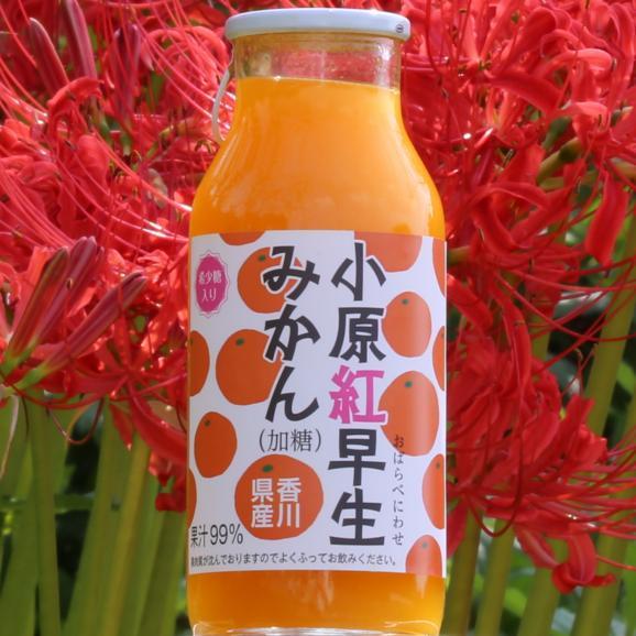 香川県産小原紅みかんジュース15本 今売れてるジュースです!年間出荷量30,000本を突破しました! お中元 お歳暮 菅内閣が発足しましたー!!経済もっともっと上向きになぁれ~ いっぺぇ売れてけれ~02