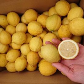 有機栽培!瀬戸内で育った完熟レモン