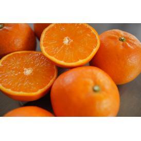 南国の極甘ジューシーみかん:タンカン(鹿児島) オレンジに似た香りとジューシーさ、ビタミンCは温州みかんの2倍!