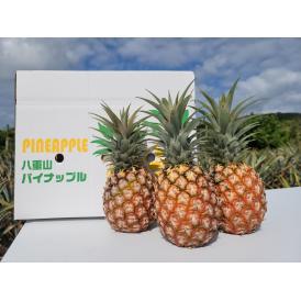芯まで全部食べられる沖縄のスナックパインです!小ぶりですが甘く、桃に似た甘い香りが特徴です。