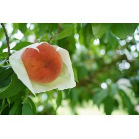 溢れる桃の蜜、水蜜桃!糖度12度以上の桃だけを厳選してお届けします。