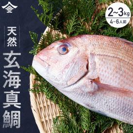 水揚高日本一 玄界灘産天然真鯛