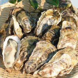 ひと粒牡蠣 殻付き 20個