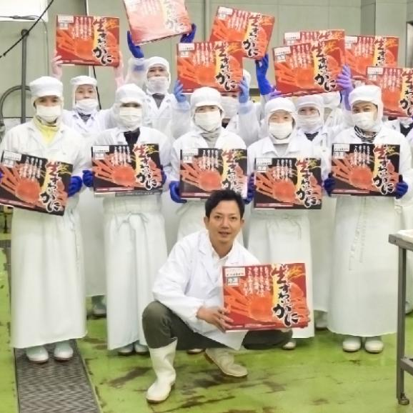 送料無料 カット済生ずわい蟹1.2kg 化粧箱入り 3人~4人前 (北海道・沖縄・離島へは別途送料が650円掛かります)05
