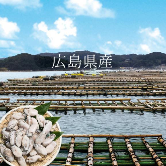【送料無料】寿司屋が厳選する牡蠣!広島県産カキ1kgMサイズ04