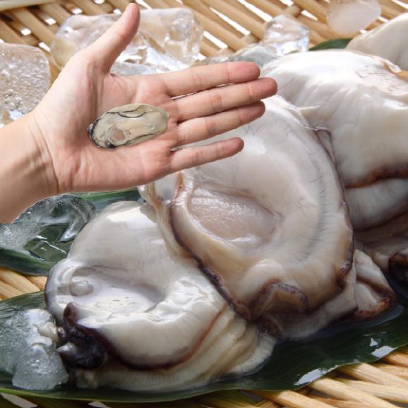 【送料無料】寿司屋が厳選する牡蠣!広島県産カキ1kgMサイズ05