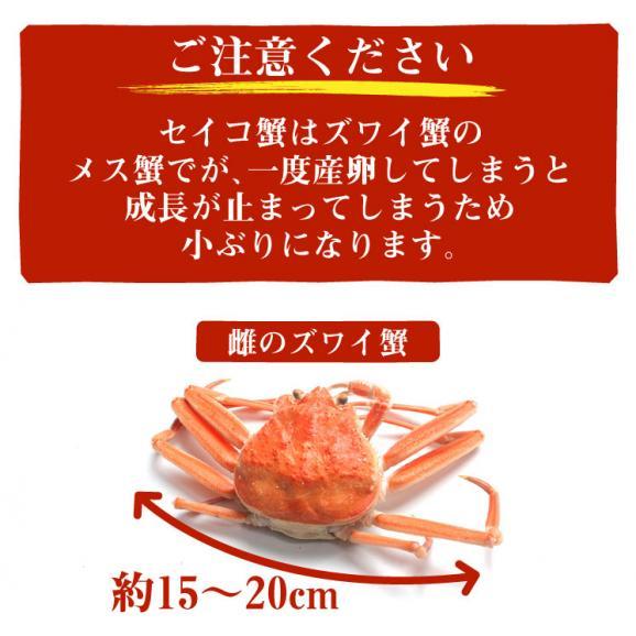 セイコ蟹(香箱蟹) 6~8杯(約1キログラム)/※11/6以降順次発送となります。日時指定は利用いただけません※北海道・沖縄・離島へは別途650円送料が掛かります。04