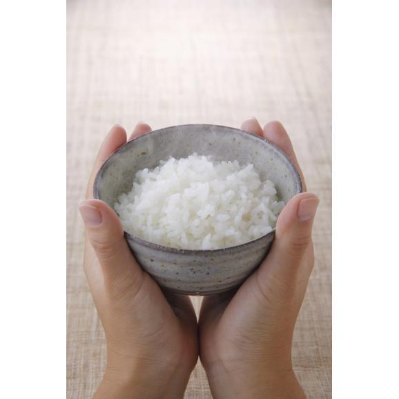 【送料無料】新潟県魚沼産こしひかり 5kg05
