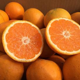 ミカン みかん 柑橘 はれひめ