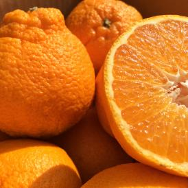みかん ミカン 柑橘