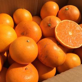 みかん ミカン 柑橘系