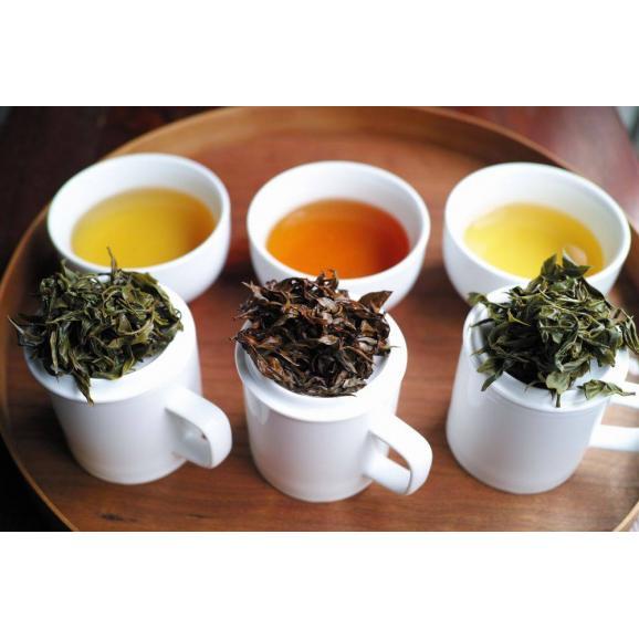 熟成萎凋煎茶 かほり02