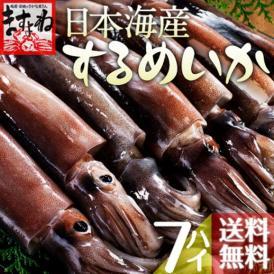 \BBQにおすすめ/日本海産するめいか7ハイ(約1.5kg)【送料無料/するめいか/スルメイカ/烏賊/イカ/いか/ますよね】