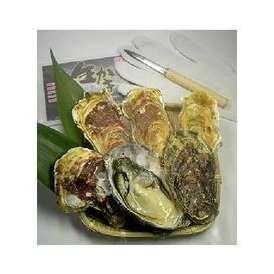リアスビックワン(宮城三陸産牡蠣 殻付きカキ貝)Lサイズ10個セット+オイスターナイフのセット(2名様にオススメ)